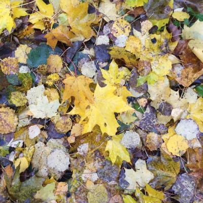 Muffler - Yellow Leaves Album